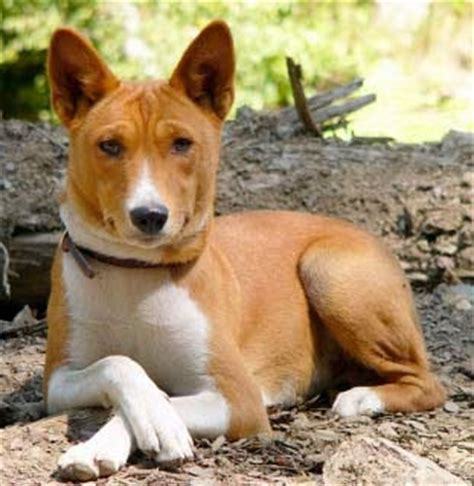 Hypoallergenic dog breeds - LUV My dogs