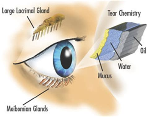 Eye Conditions - Dry Eyes - Flashes & Floaters - Eye