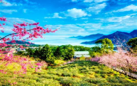 China Bloom On Cherry Spring Sky Clouds Trees Mountains