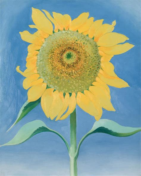 Sunflower, New Mexico 1, 1935 by Georgia O'Keeffe - Paper